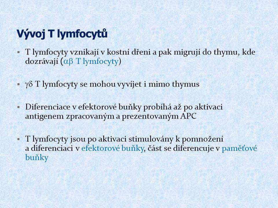 Vývoj T lymfocytů T lymfocyty vznikají v kostní dřeni a pak migrují do thymu, kde dozrávají (ab T lymfocyty)