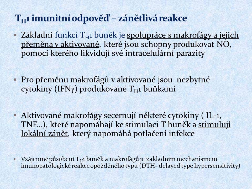 TH1 imunitní odpověď – zánětlivá reakce