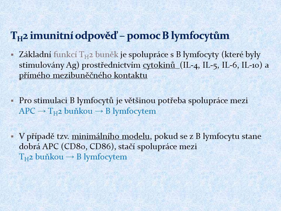 TH2 imunitní odpověď – pomoc B lymfocytům