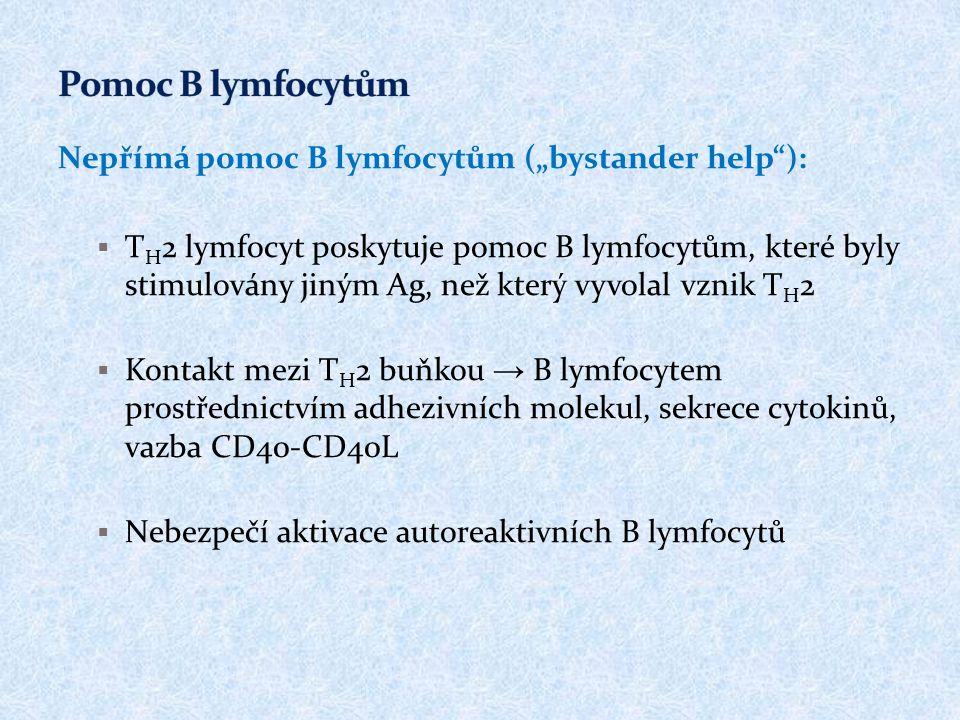 "Pomoc B lymfocytům Nepřímá pomoc B lymfocytům (""bystander help ):"