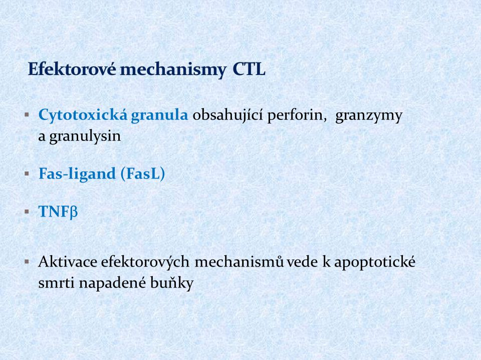 Efektorové mechanismy CTL
