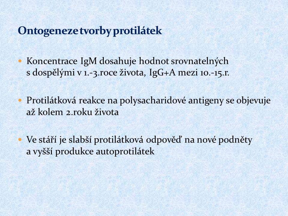 Ontogeneze tvorby protilátek