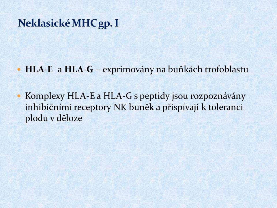 Neklasické MHC gp. I HLA-E a HLA-G – exprimovány na buňkách trofoblastu.