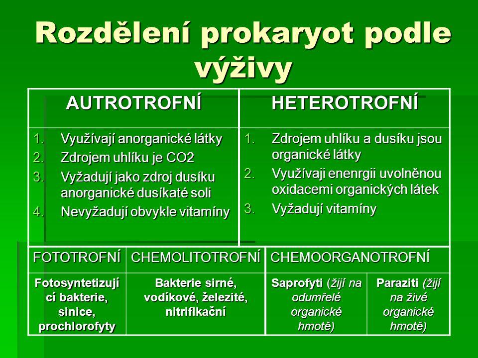 Rozdělení prokaryot podle výživy