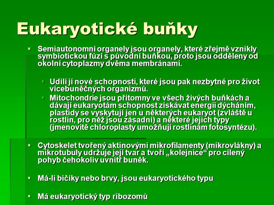 Eukaryotické buňky