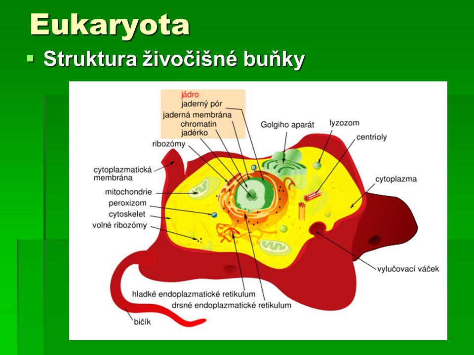 Eukaryota Struktura živočišné buňky