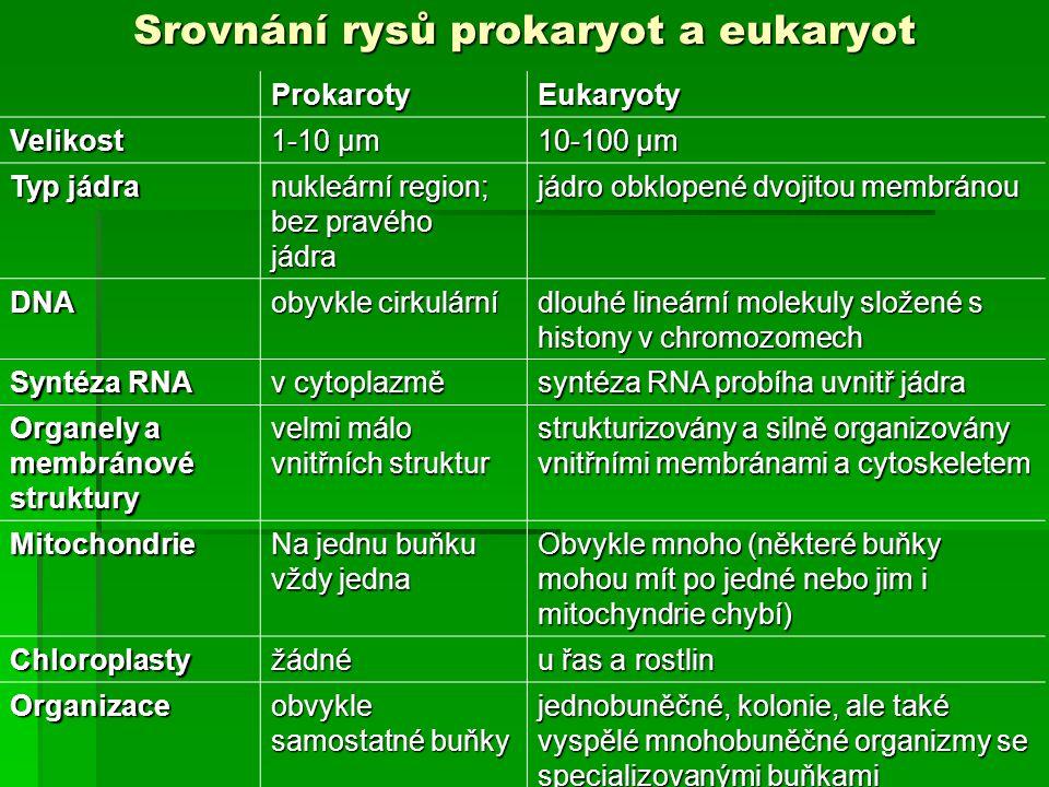 Srovnání rysů prokaryot a eukaryot