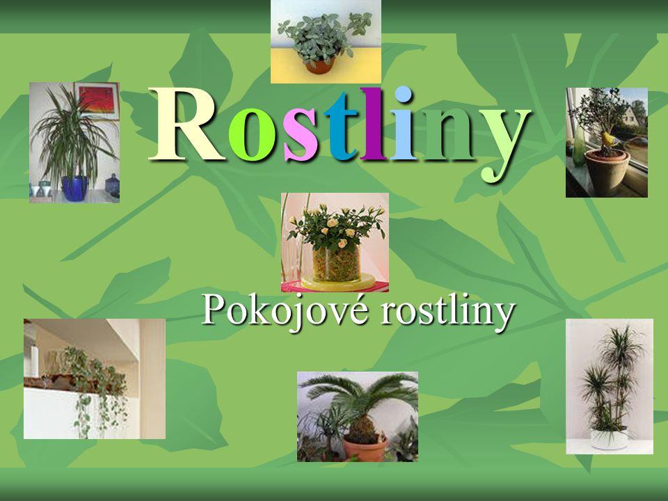 Rostliny Pokojové rostliny