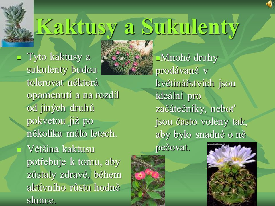Kaktusy a Sukulenty Tyto kaktusy a sukulenty budou tolerovat některá opomenutí a na rozdíl od jiných druhů pokvetou již po několika málo letech.