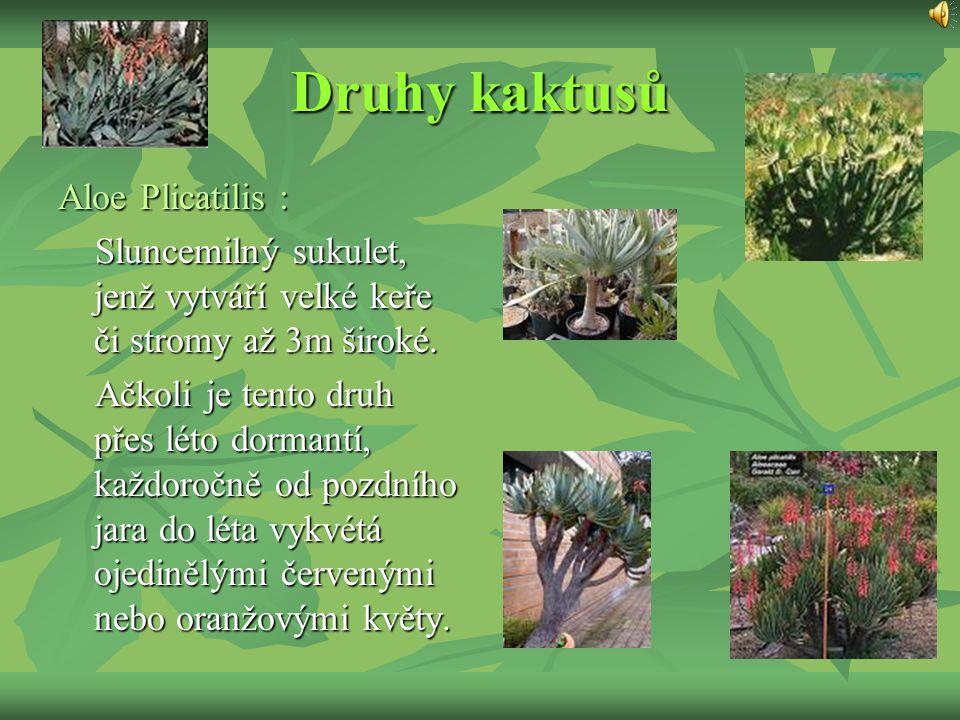 Druhy kaktusů