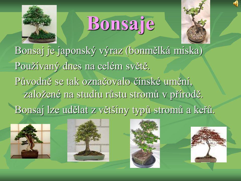 Bonsaje Bonsaj je japonský výraz (bonmělká miska)