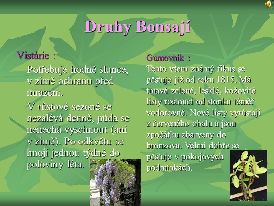 Druhy Bonsají Vistárie :