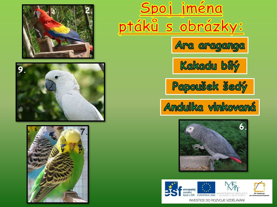 Spoj jména ptáků s obrázky: