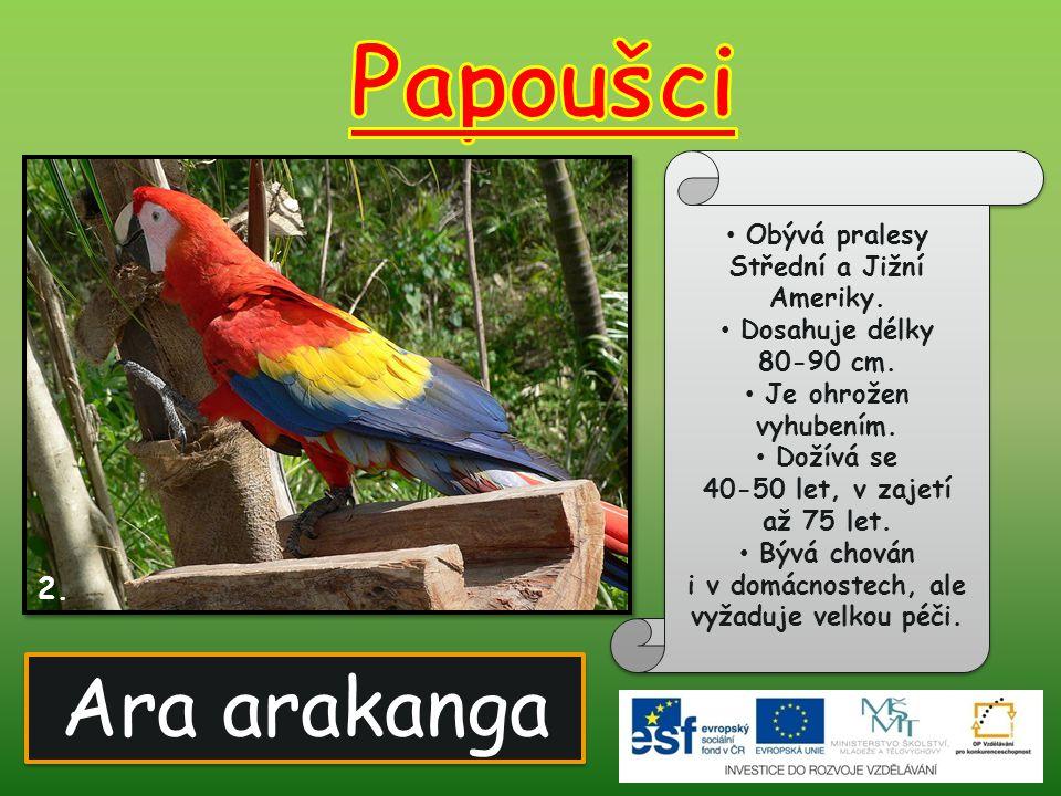 Papoušci Ara arakanga 2. Obývá pralesy Střední a Jižní Ameriky.