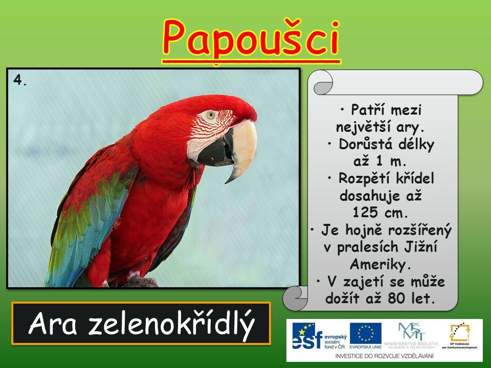 Papoušci Ara zelenokřídlý Patří mezi největší ary.