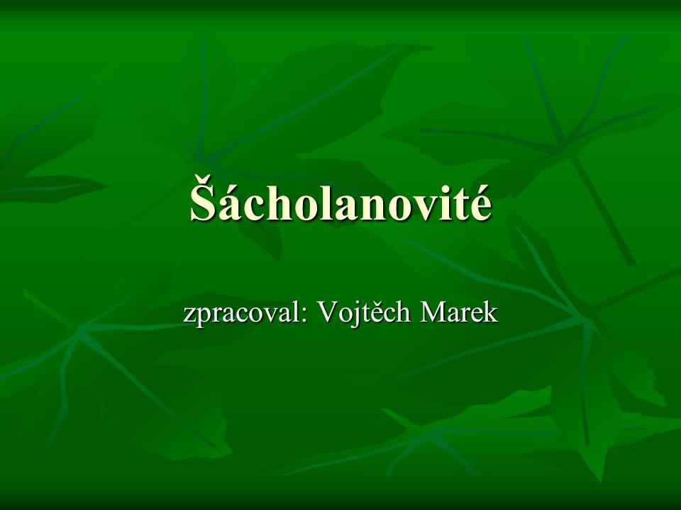 zpracoval: Vojtěch Marek