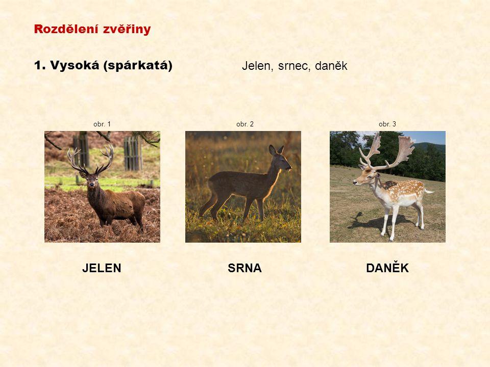 Rozdělení zvěřiny 1. Vysoká (spárkatá) Jelen, srnec, daněk JELEN SRNA