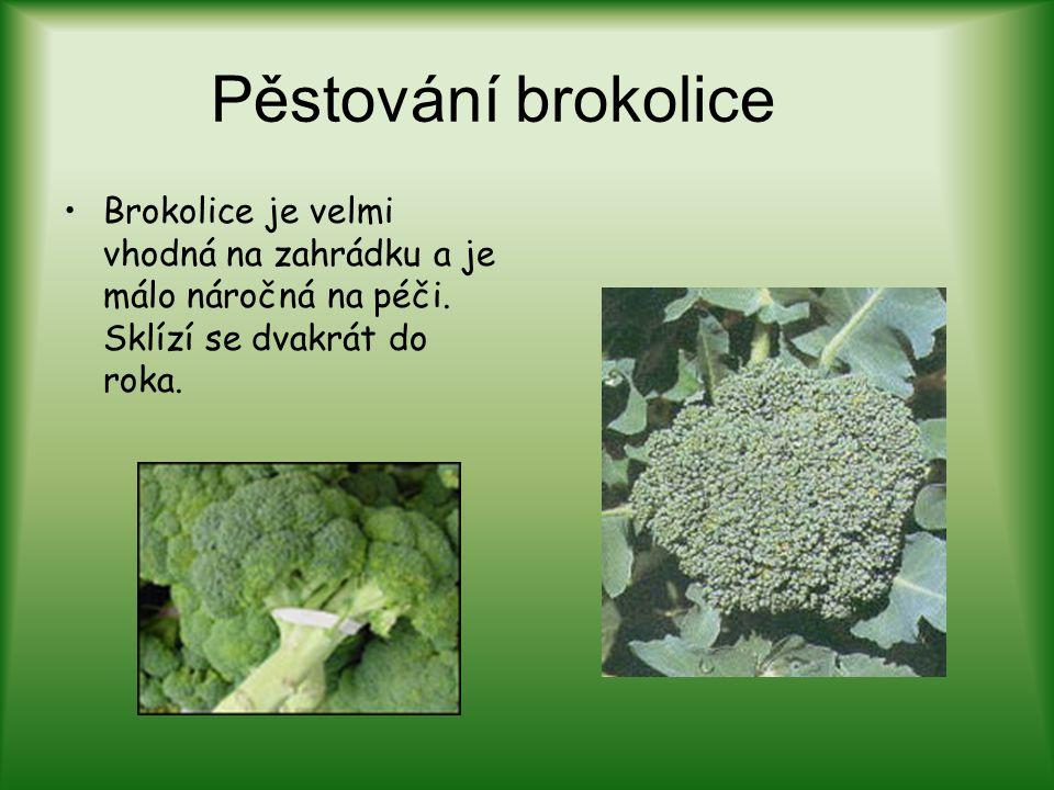 Pěstování brokolice Brokolice je velmi vhodná na zahrádku a je málo náročná na péči.