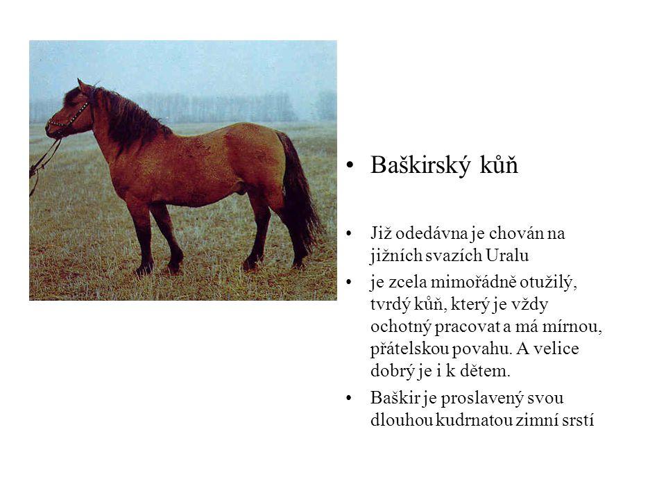 Baškirský kůň Již odedávna je chován na jižních svazích Uralu