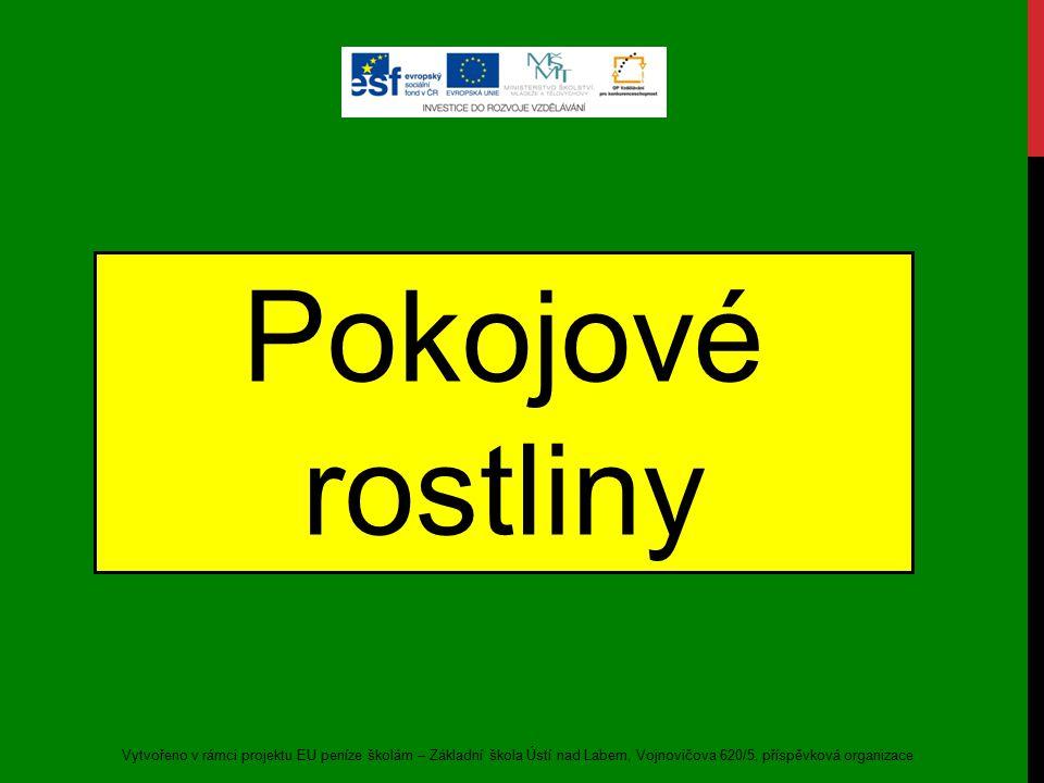 Pokojové rostliny Vytvořeno v rámci projektu EU peníze školám – Základní škola Ústí nad Labem, Vojnovičova 620/5, příspěvková organizace.