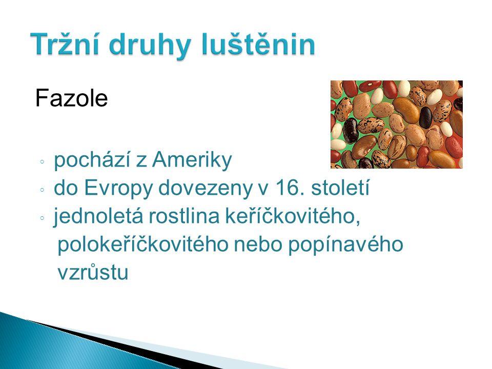 Tržní druhy luštěnin Fazole pochází z Ameriky