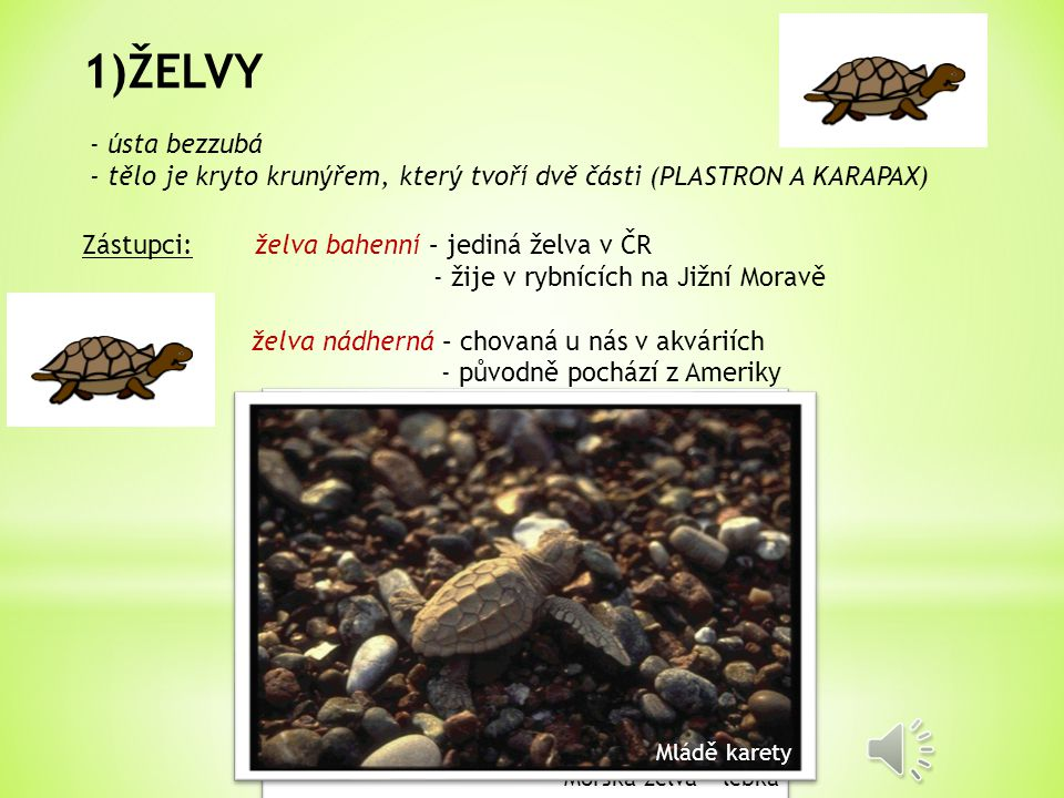 ŽELVY - ústa bezzubá. - tělo je kryto krunýřem, který tvoří dvě části (PLASTRON A KARAPAX) Zástupci: želva bahenní – jediná želva v ČR.