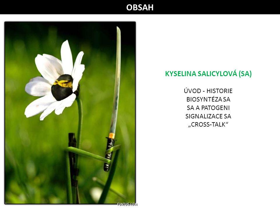 KYSELINA SALICYLOVÁ (SA)