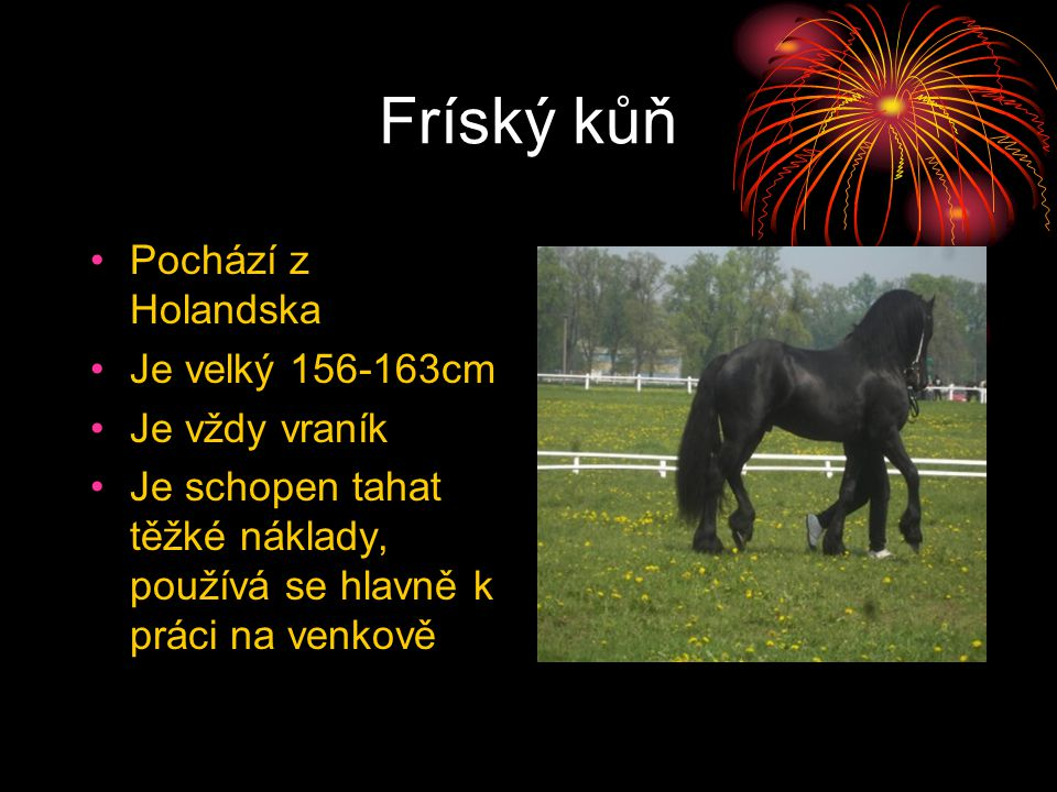 Fríský kůň Pochází z Holandska Je velký 156-163cm Je vždy vraník