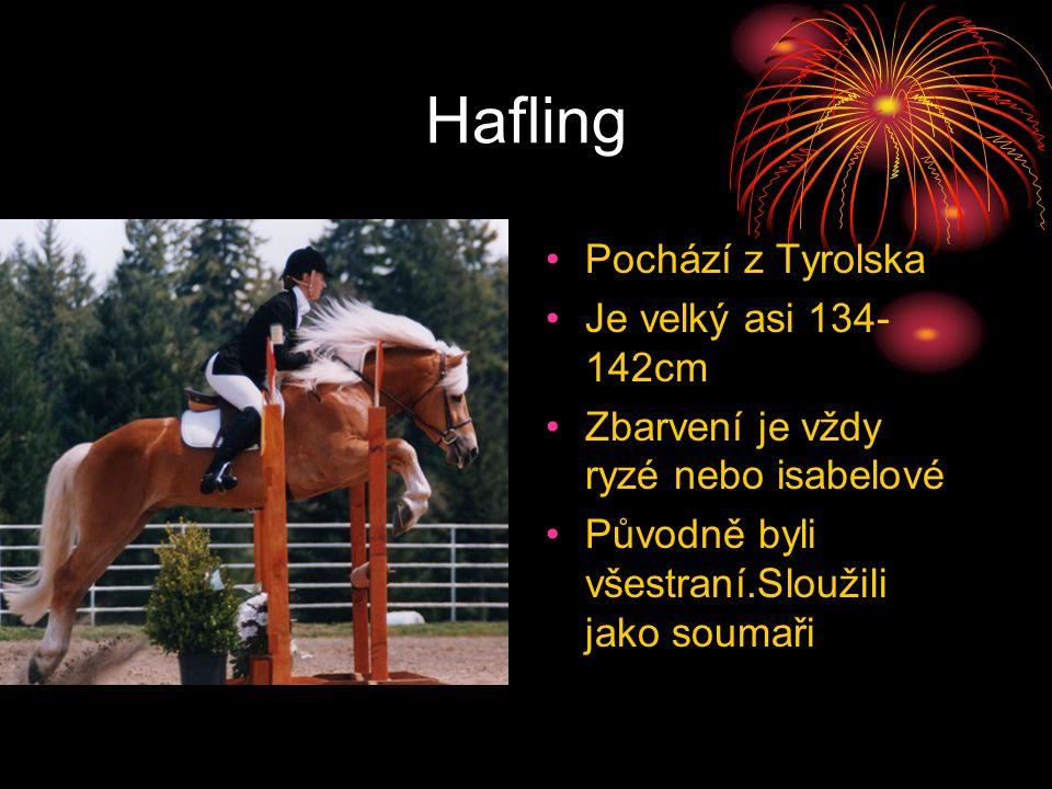 Hafling Pochází z Tyrolska Je velký asi 134-142cm