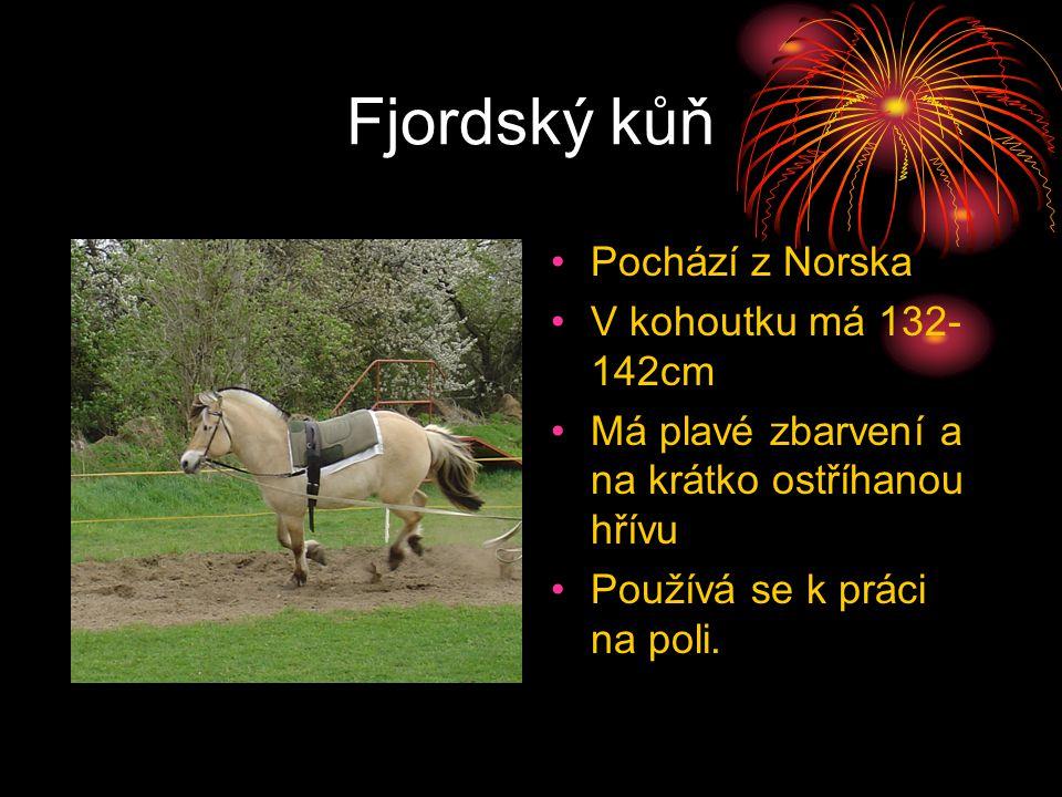 Fjordský kůň Pochází z Norska V kohoutku má 132-142cm
