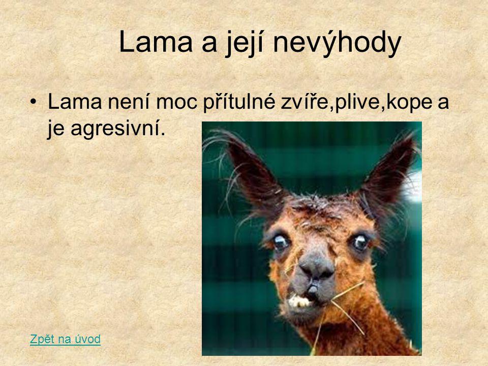 Lama a její nevýhody Lama není moc přítulné zvíře,plive,kope a je agresivní. Zpět na úvod