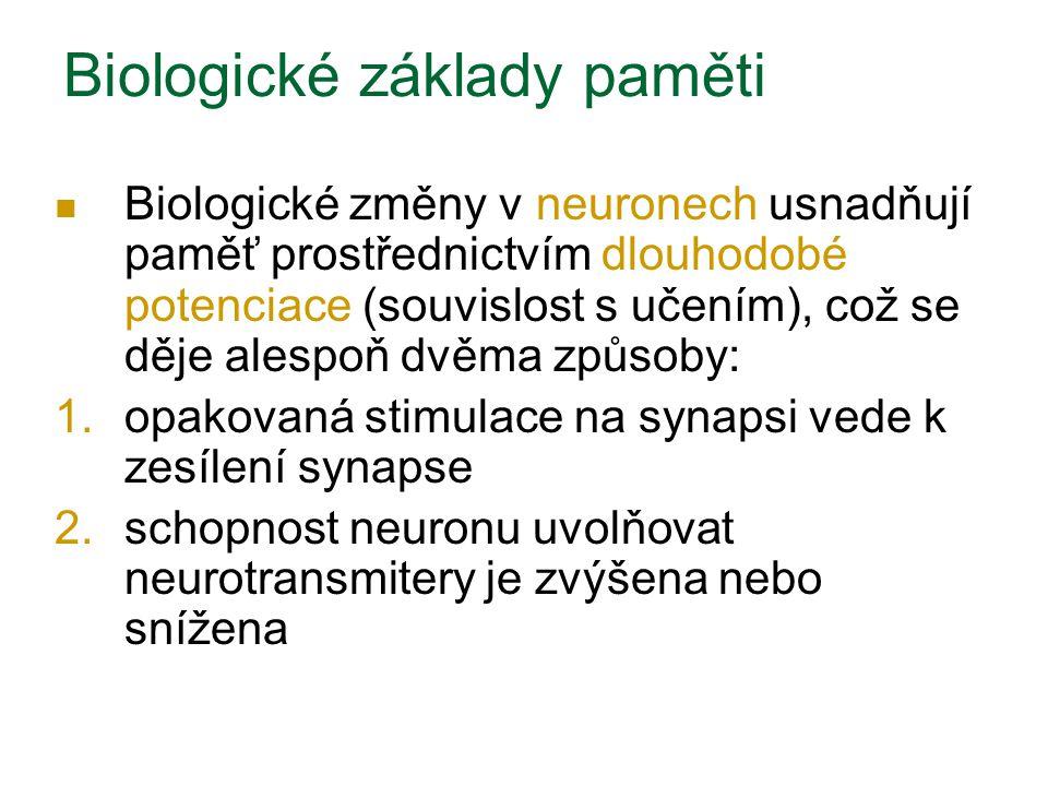 Biologické základy paměti