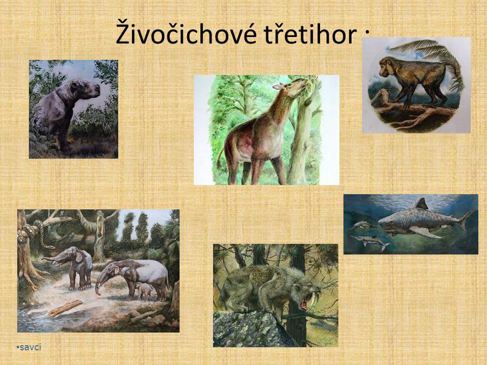 Živočichové třetihor :