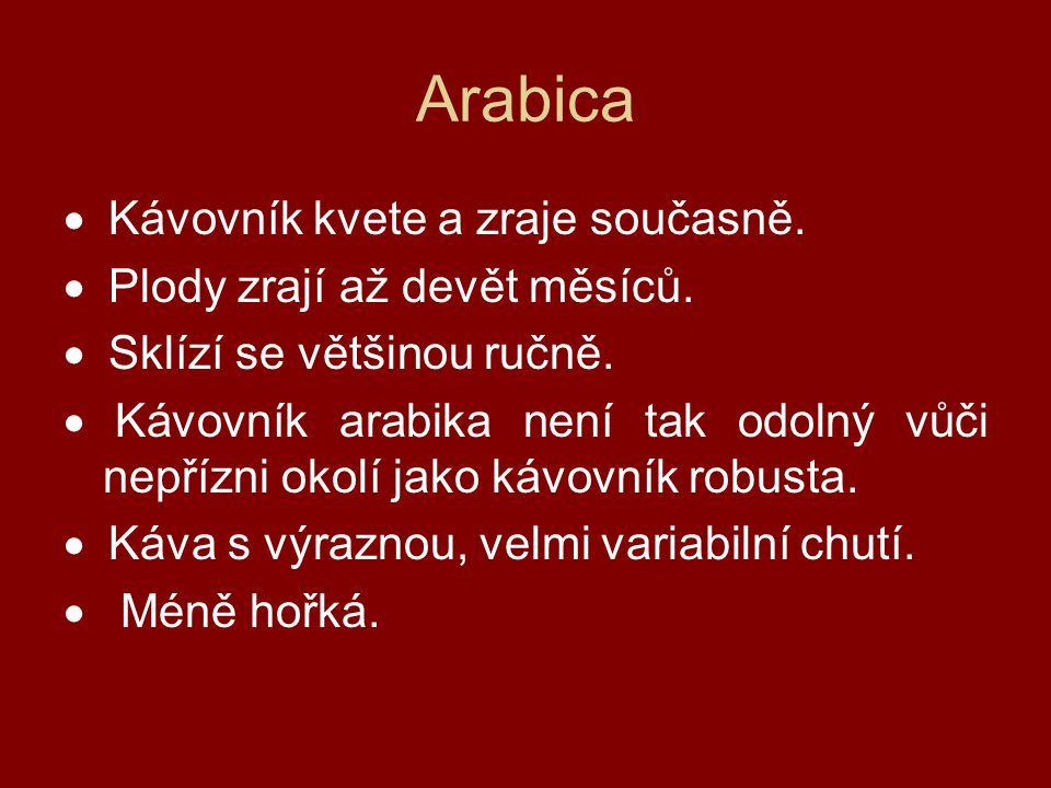 Arabica · Kávovník kvete a zraje současně.