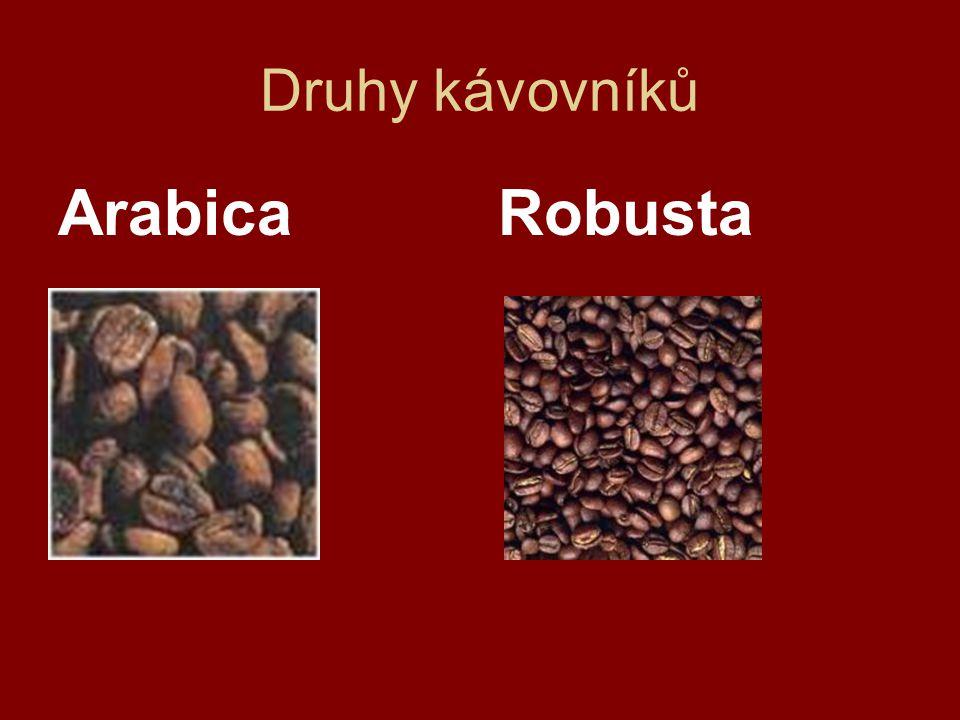 Druhy kávovníků Arabica Robusta
