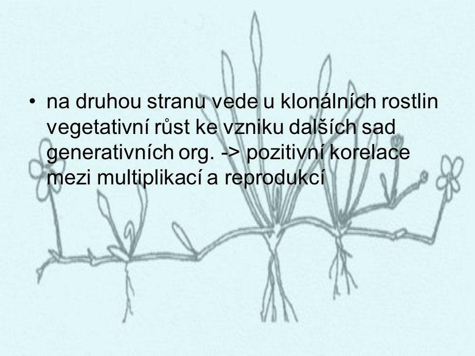 na druhou stranu vede u klonálních rostlin vegetativní růst ke vzniku dalších sad generativních org.