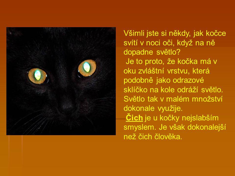 Všimli jste si někdy, jak kočce svítí v noci oči, když na ně dopadne světlo.
