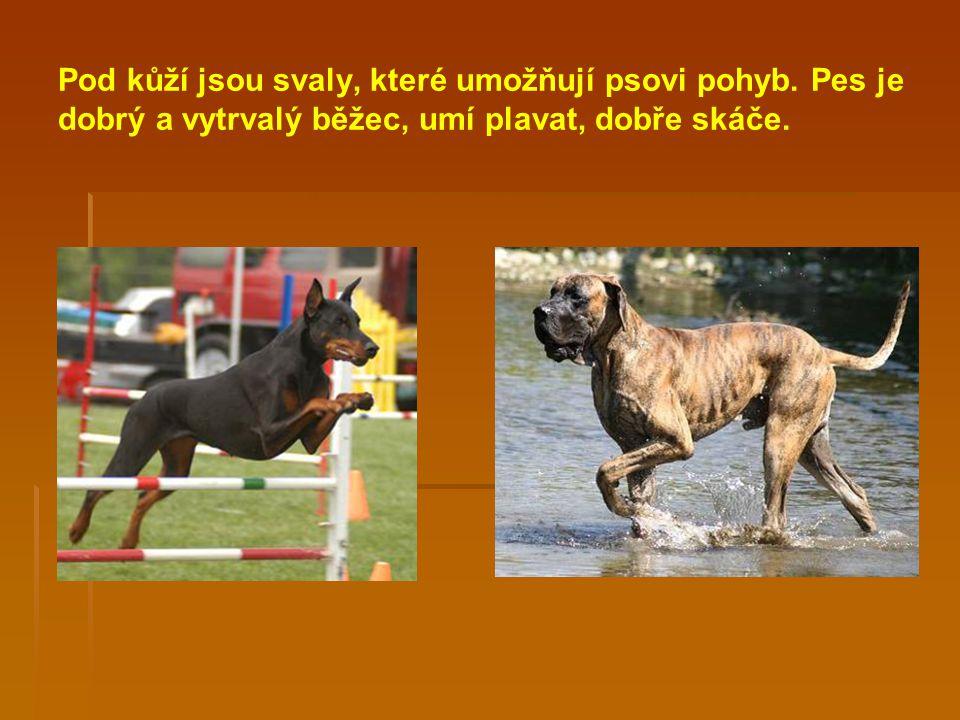 Pod kůží jsou svaly, které umožňují psovi pohyb
