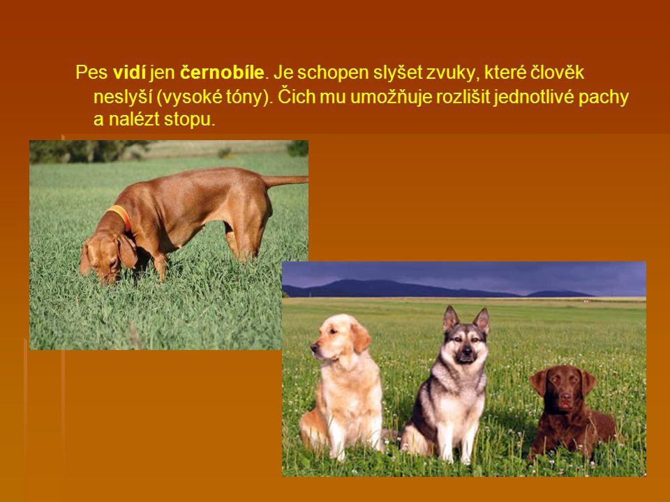 Pes vidí jen černobíle. Je schopen slyšet zvuky, které člověk neslyší (vysoké tóny).