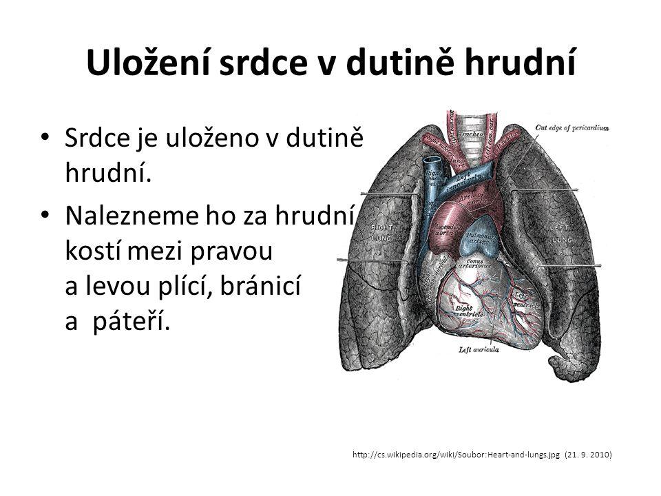 Uložení srdce v dutině hrudní