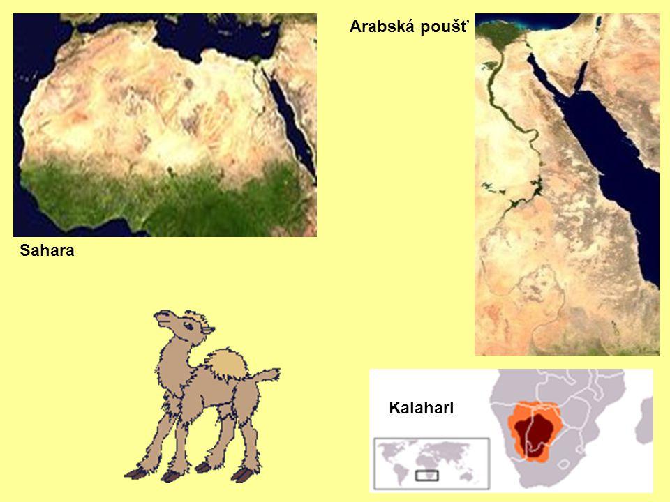 Arabská poušť Sahara Kalahari