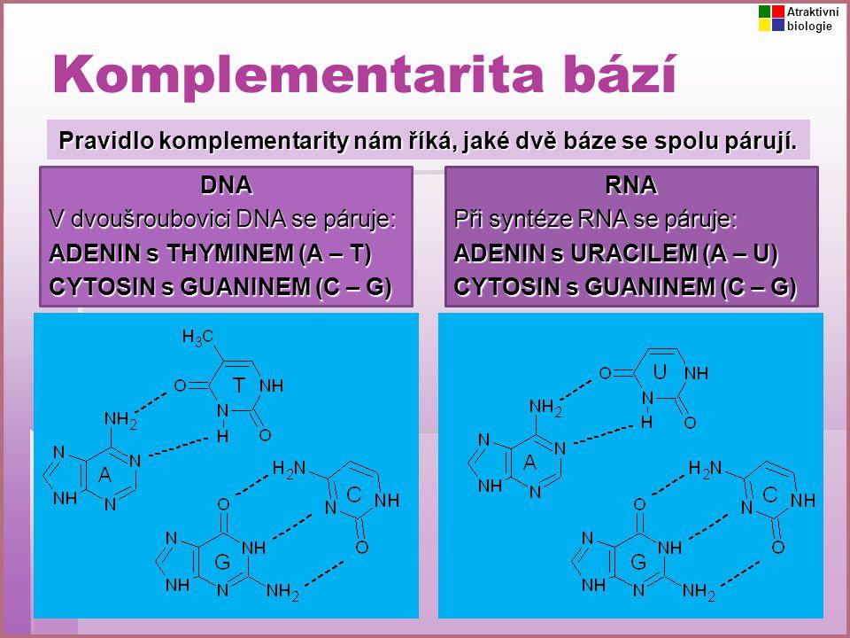 Pravidlo komplementarity nám říká, jaké dvě báze se spolu párují.