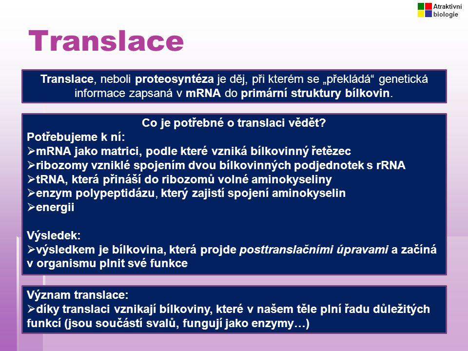 Co je potřebné o translaci vědět