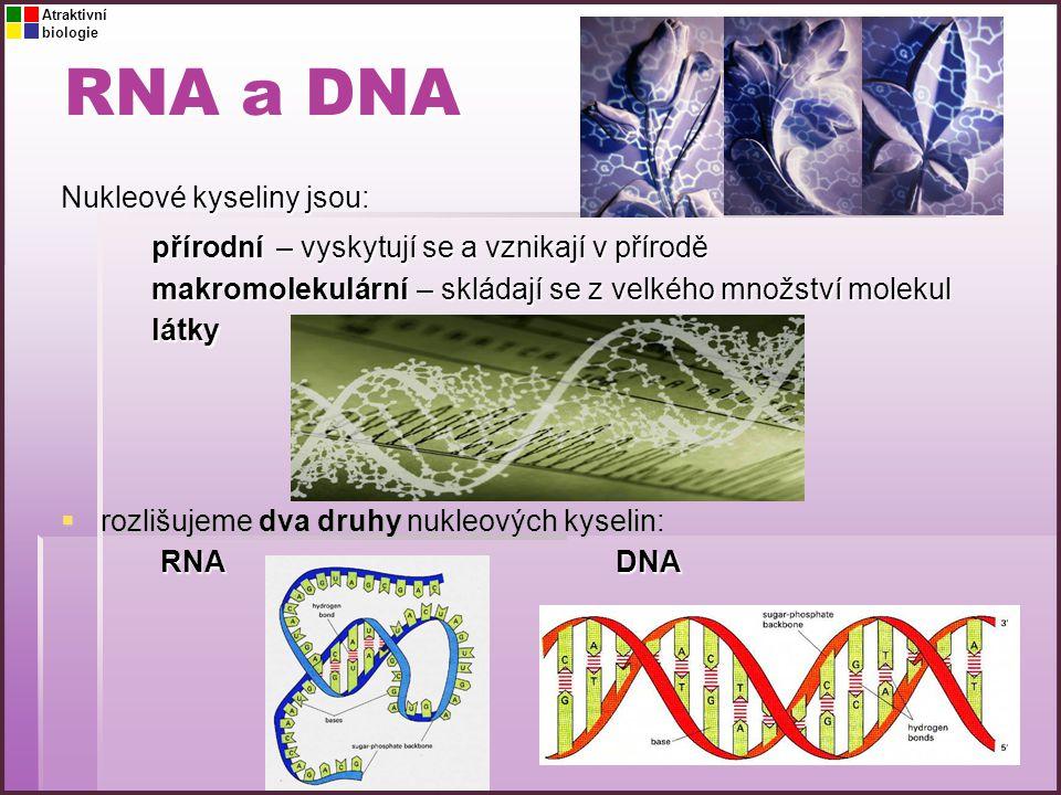 RNA a DNA Nukleové kyseliny jsou: přírodní