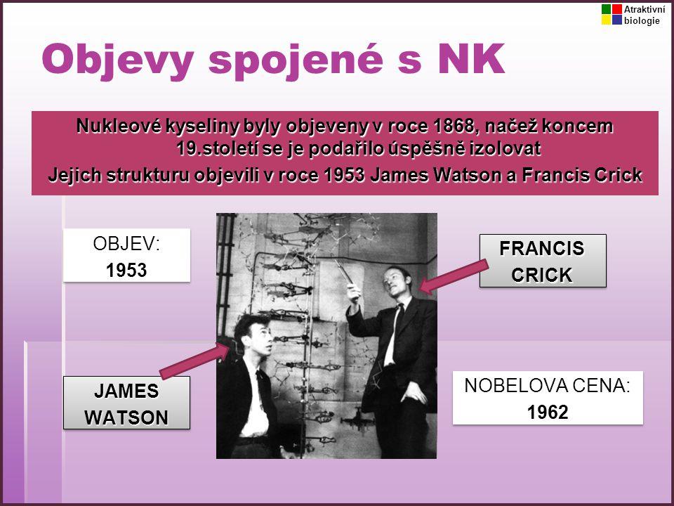 Atraktivní biologie. Objevy spojené s NK.