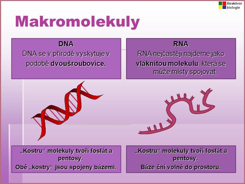 Makromolekuly DNA DNA se v přírodě vyskytuje v podobě dvoušroubovice.