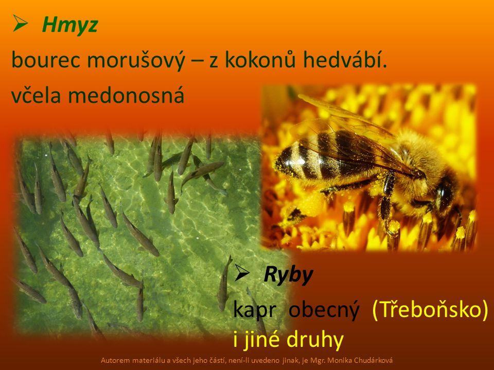 Hmyz bourec morušový – z kokonů hedvábí. včela medonosná