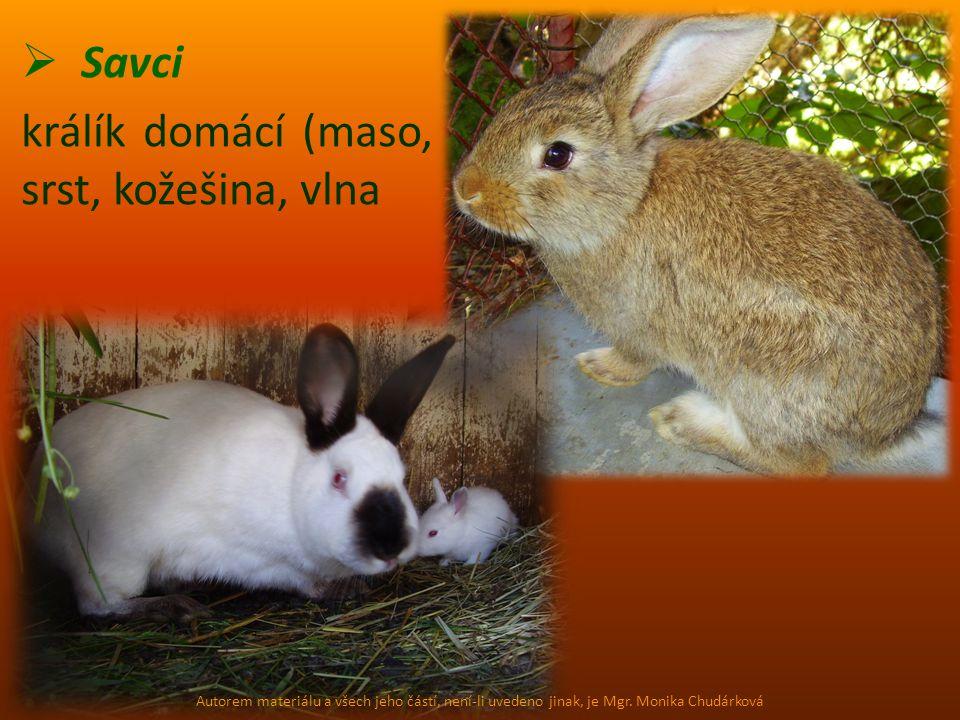 Savci králík domácí (maso, srst, kožešina, vlna