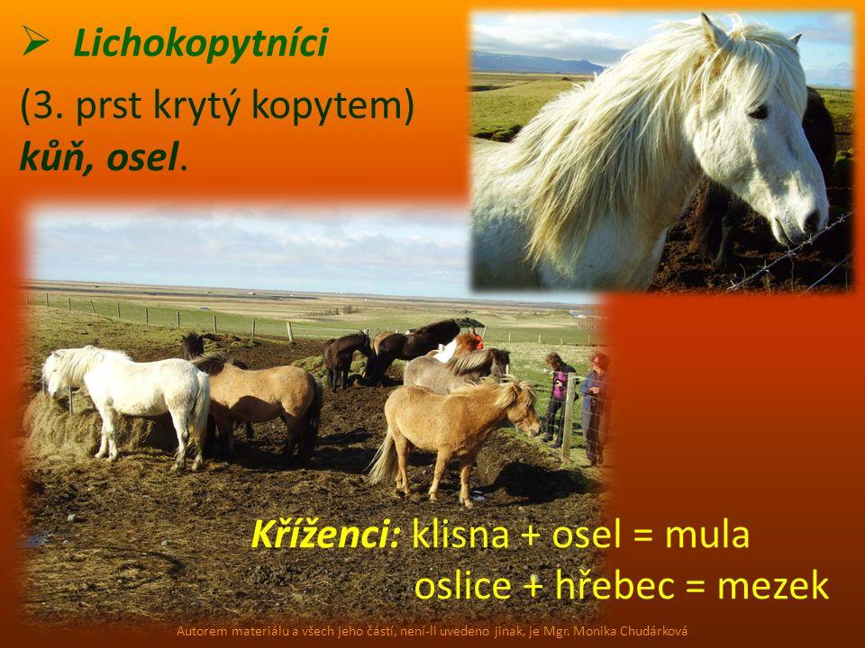 Kříženci: klisna + osel = mula oslice + hřebec = mezek