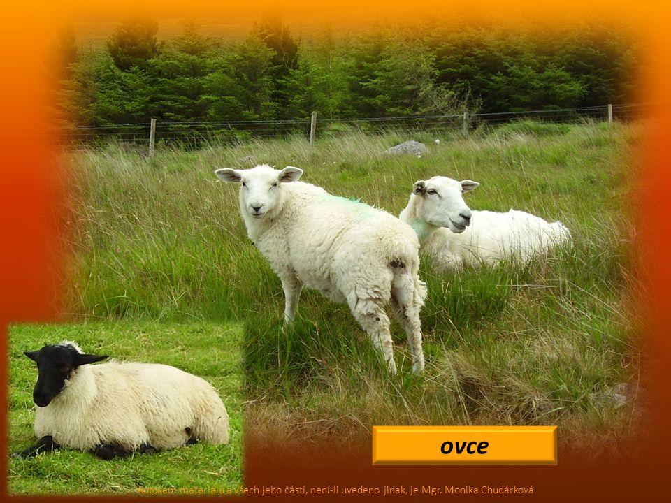 ovce Autorem materiálu a všech jeho částí, není-li uvedeno jinak, je Mgr. Monika Chudárková